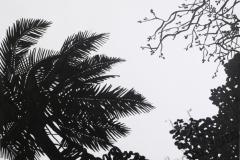"""""""Пальмы 2"""", март 2009, бум./акрил"""